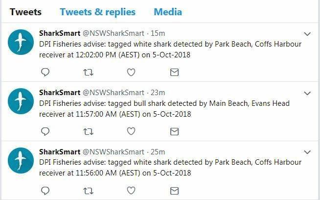 Sharks at Park Beach 06/10.