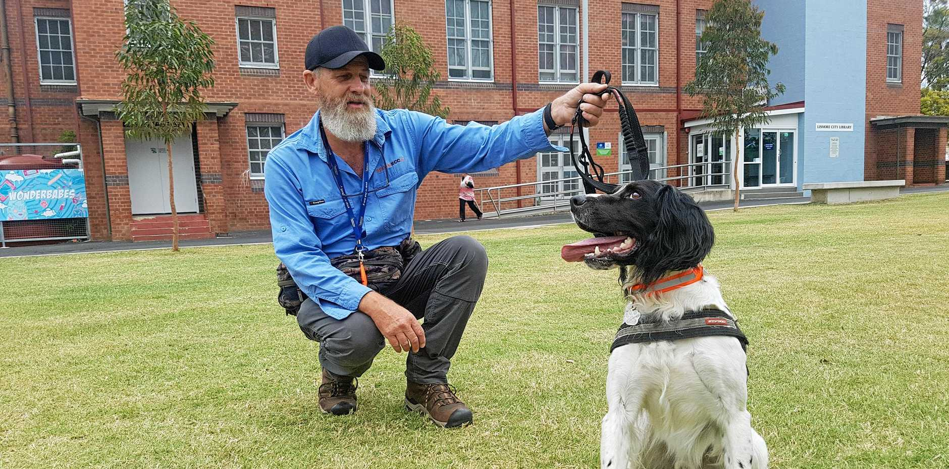 GOOD BOY: Handler Craig Faulkner with yellow crazy ant detection dog Jet at the Quad in Lismore.