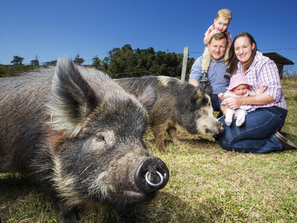 Hayden Winter and Jade Tighe with son Leo 2, and daughter Evie 5 months, and their pet pigs on their Kandanga property they picked up for a steal off the Queensland State Government after the failed Traveston Crossing Dam Project. Picture: Lachie Millard