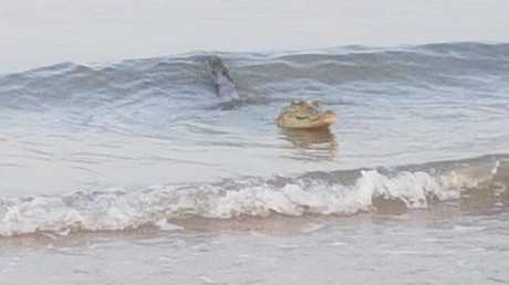 Never smile at a  crocodile ... unless they're a surfing crocodile. Picture: Philip Toonson