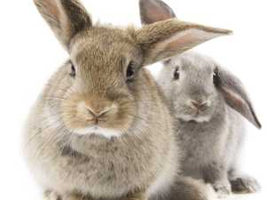 200 million rabbits pose threat to our agricultural land