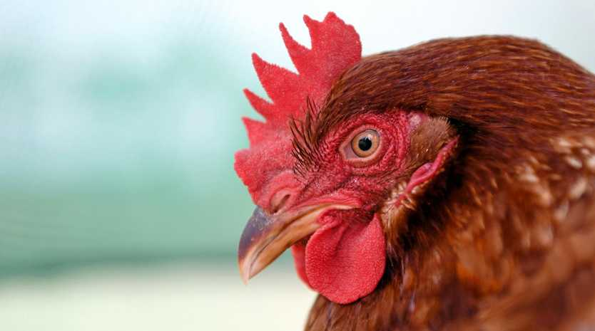 Tansey organic farmers Rawganix have applied to increase their poultry farming capacity.