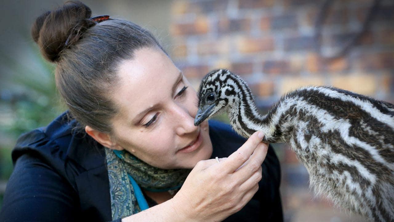 Eddie the emu with the earrings' owner, wildlife carer Melanie Pope. Picture: Jamie Hanson