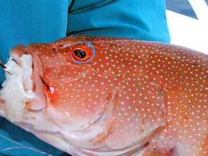 Protective fishing closures set until 2023