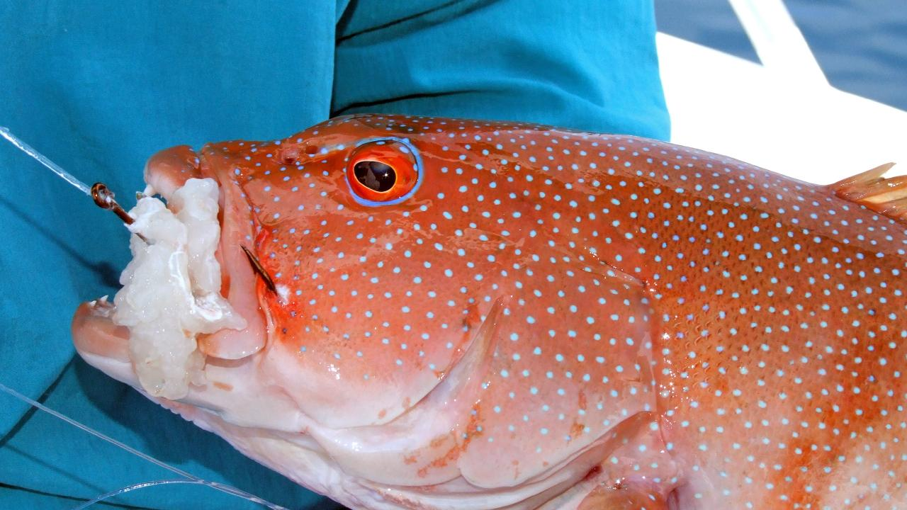 Fishing closures to protect reef species such as emperors, cods, groupers, coral trout and tropical snapper have been set up for the next five years.