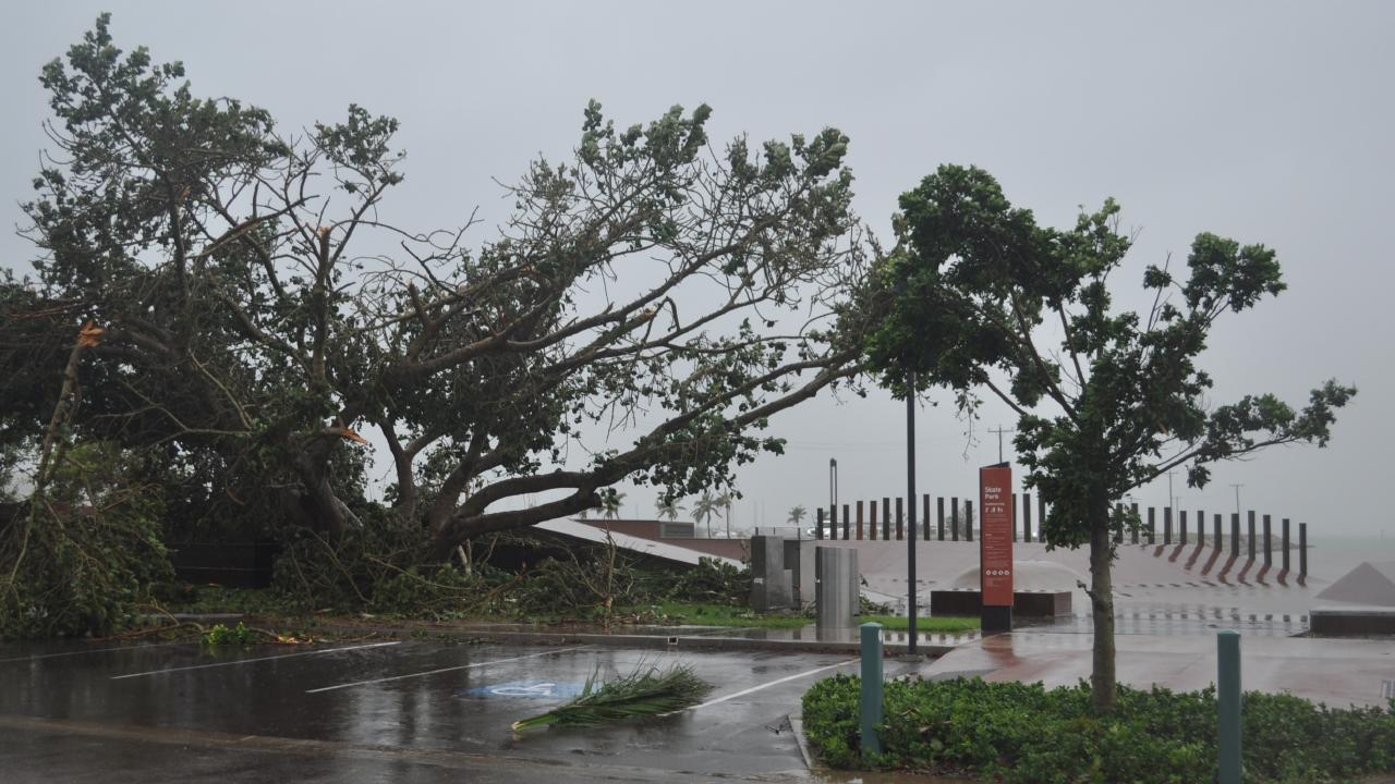 Trees at Bowen's Skate Park took a battering during Cyclone Debbie.