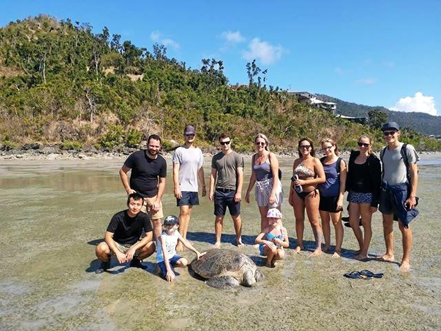TURTLE TEAM: A group of local passers-by and Fat Frog Cafe staff came to help the suspected stranded green sea turtle.