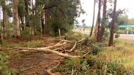 DAMAGE: Trees down on the Steve Irwin Way bike path opposite the Puma Service Station.