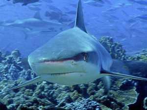Sharks sighted at popular CQ beach