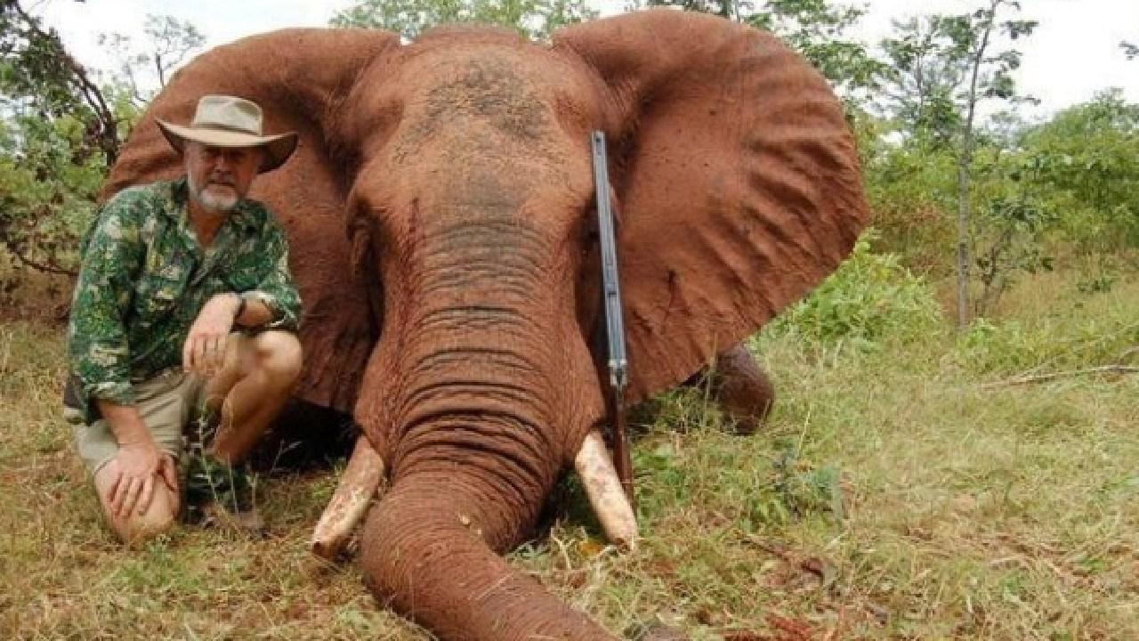 Robert Borsak on a hunting trip. He said he ate the elephant too.