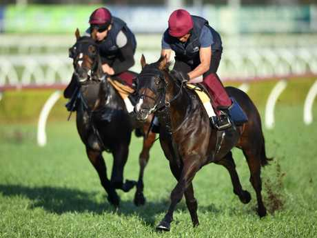 Irish horse US Navy Flag (right) will represent Coolmore in the $13 million TAB Everest at Royal Randwick this Saturday.