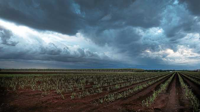 BIG WET: Storms are headed to Stanthorpe.