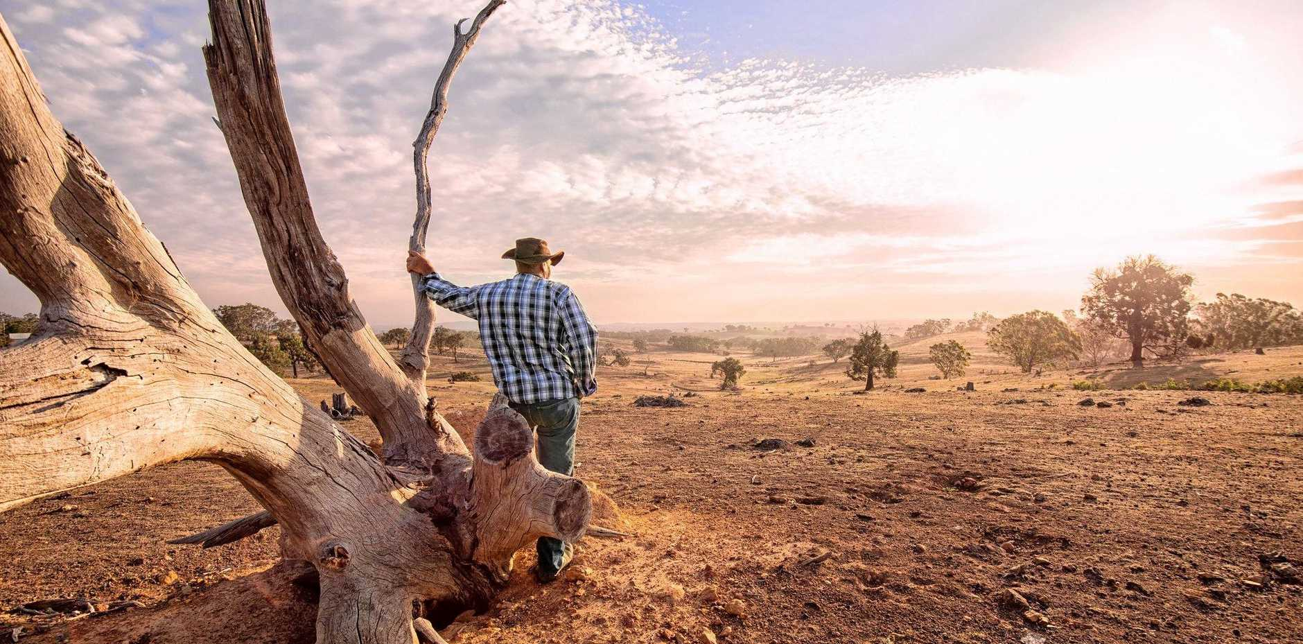 A farmer looks out over the drought stricken land.