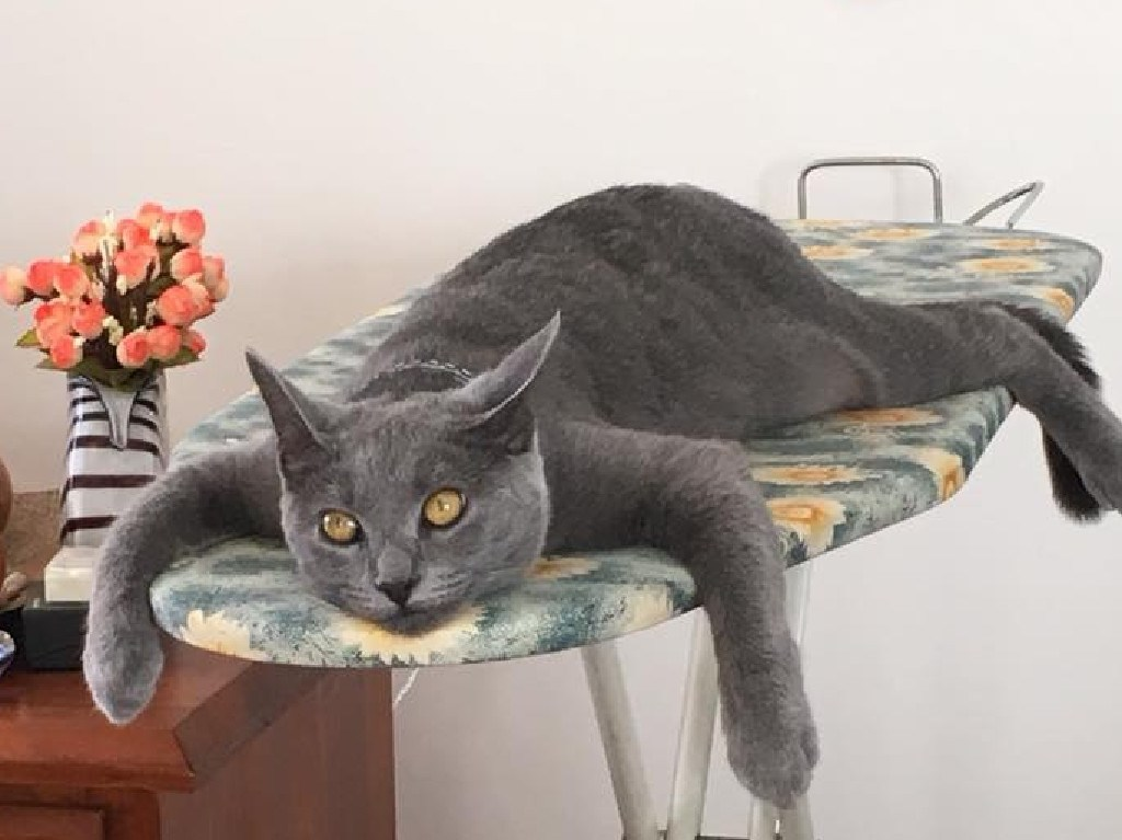Instead, use your ironing board as a cat bed! Picture: Raymond Dyer