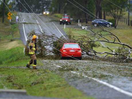 Downed trees and power lines at Gympie