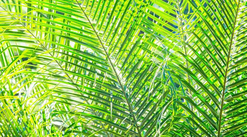 Be sure to plant palms in well drained soil or a pot with good soil and good drainage.