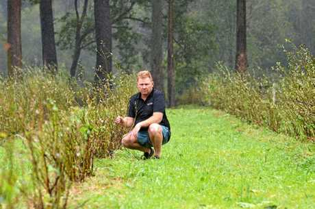 GUTTED: Jason Lewis from Cooloola Berries