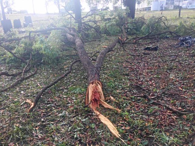 Huge tree snapped like twigs at Robyne Cuerel's Tinana property during the cell storm on October 11.