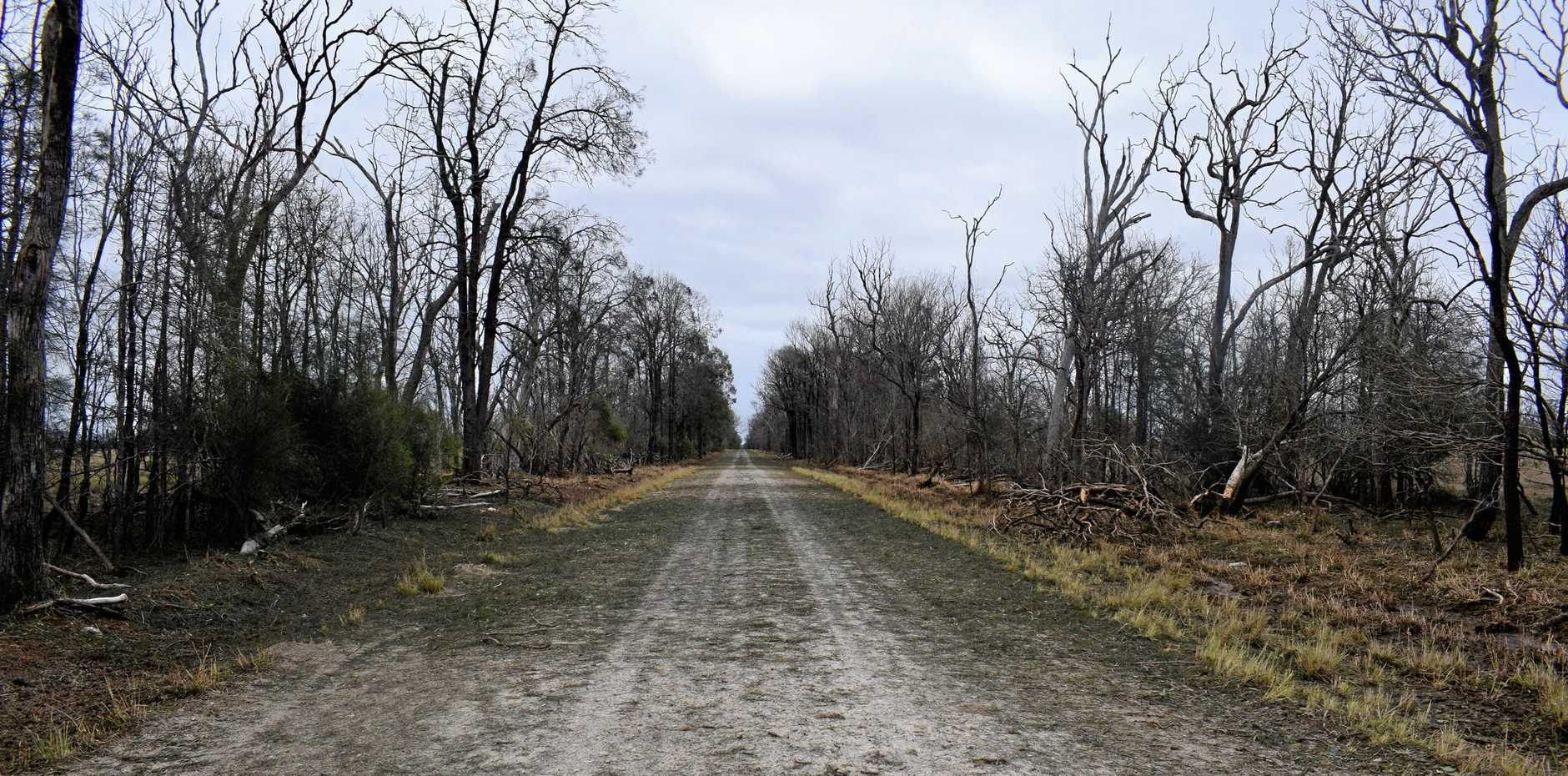 GONE: Hail stripped the leaves off trees on this road near watermelon farmer Tom Brett's property.