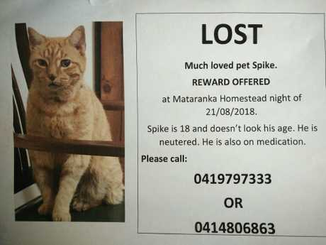Spike was found 7km from Mataranka Springs after being lost for six weeks. His humans put signs up EVERYWHERE ....