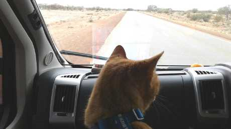 Spike is well-travelled, but he almost became a purrrrr-manent Territorian