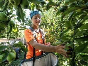 Bludgers told: Pick fruit or lose handout