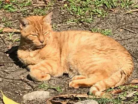 Spike, a Brisbane couple's 18-year-old cat, is now officially an Outback survivor