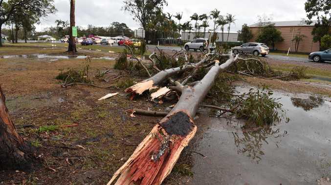 SUPERCELL: A fallen tree near Riverside Christian College