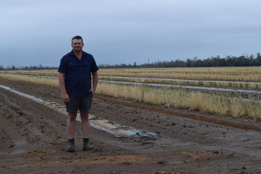 Some of Chinchilla melon farmer Tom Brett's crops were damaged in the recent hailstorm.