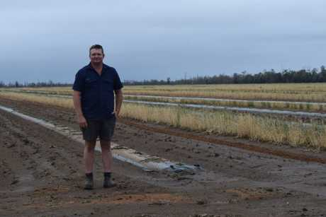 Some of Chinchilla melon farmer Tom Brett's crops were damaged in the recent hailstorm.