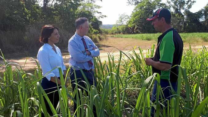 INDUSTRY UPDATE: Belinda Hassan, Labor candidate for Dawson and Senator Chris Ketter met with grower Simon Mattsson to inspect a cane crop at Marian last week.