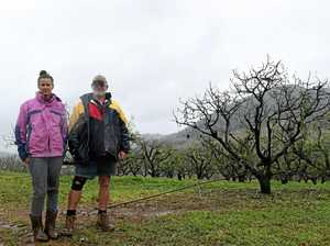 Farmers lose 3,500 avocado trees in horror storm