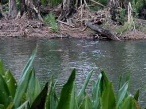 Police, rangers hunt killer croc