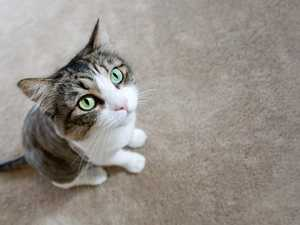 US embassy's apology for awkward cat email