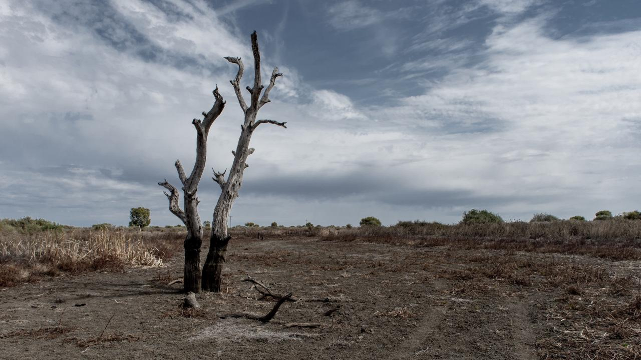 Parts of Australia have seen their worst drought in years. Picture: AAP Image/Perry Duffin