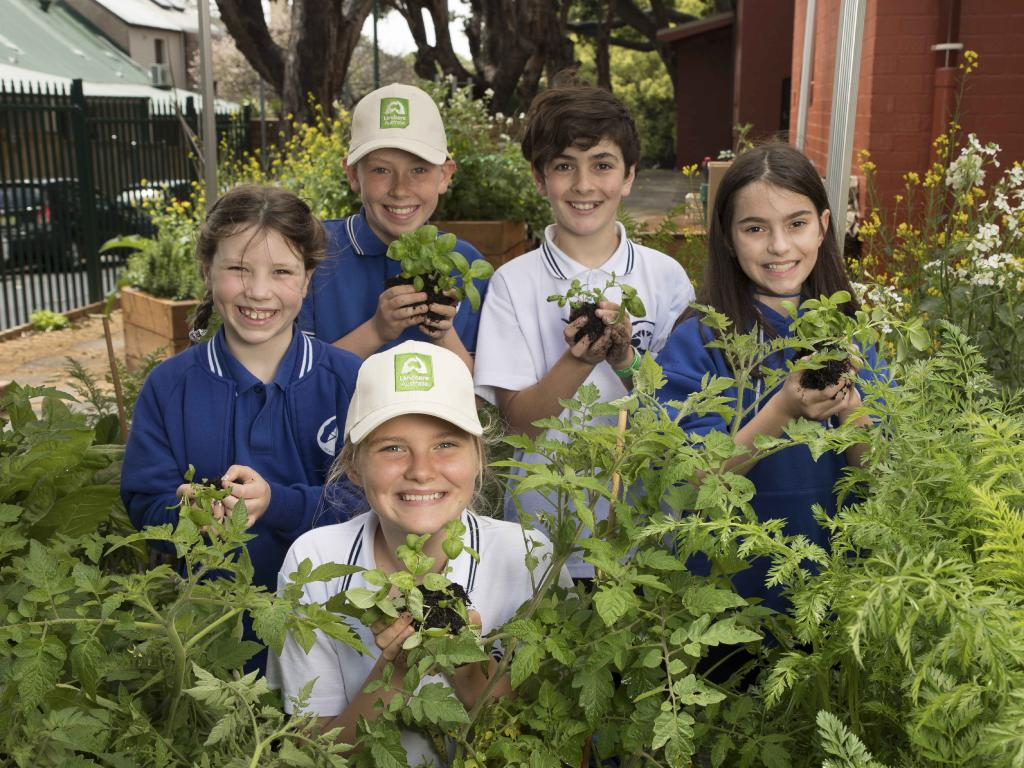 Newtown Public School students,  in their vegetable patch, have benefited from the program. Picture: Chris Pavlich