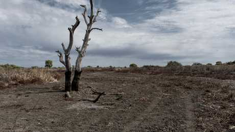 The drought has hit farmers hard. Picture: AAP Image/Perry Duffin