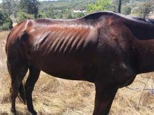 Three to face animal cruelty charge over 'neglected' horse