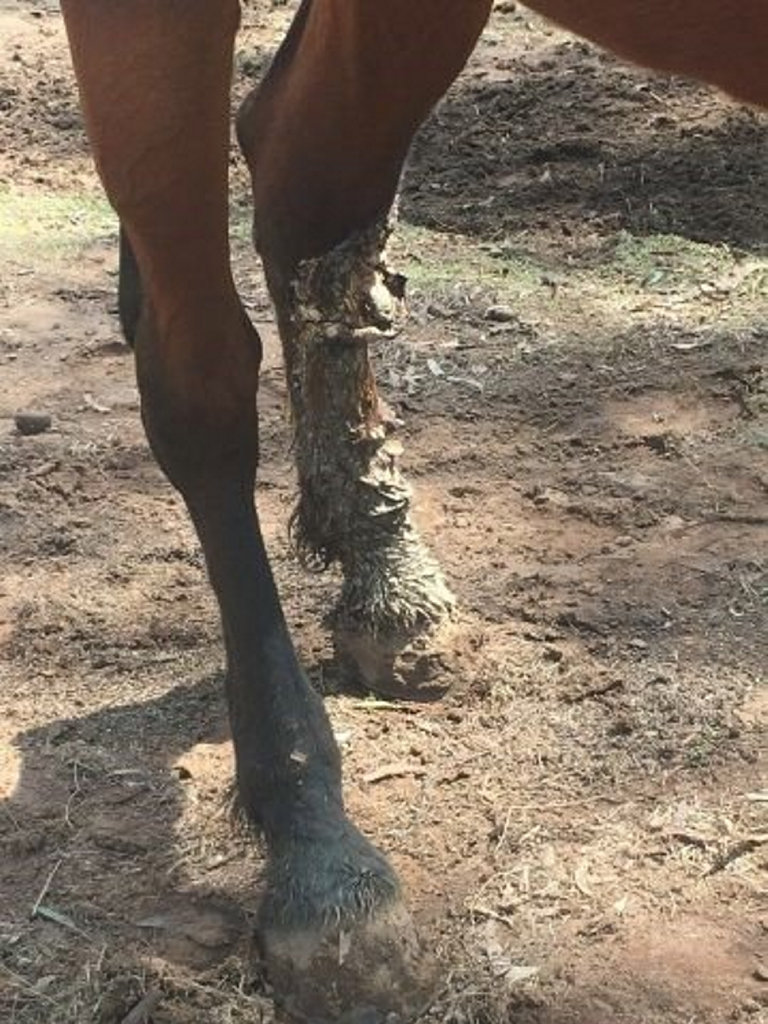Authorities allege a four-year-old thoroughbred mare was severely neglected and underweight.