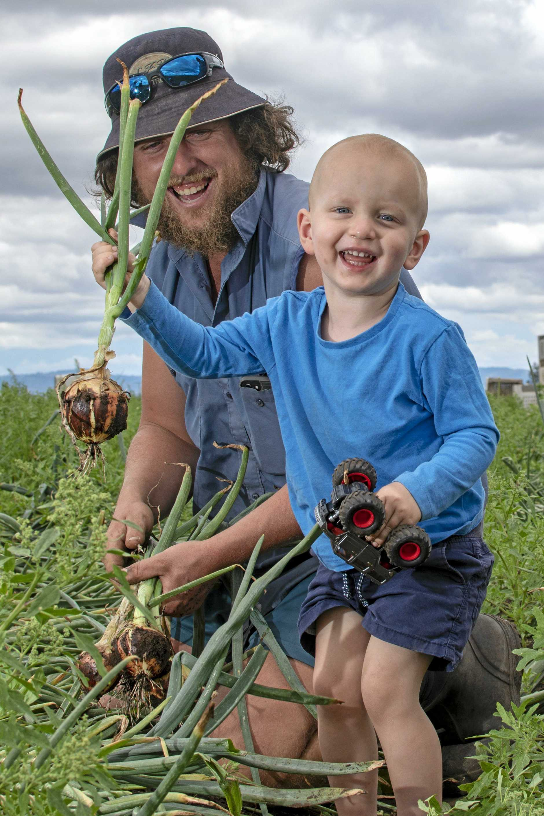 LOOKING GOOD: Andrew Mildren, Reck Farms, Lower Tent Hil, with his son Cooper, 2, inspecting some onions.
