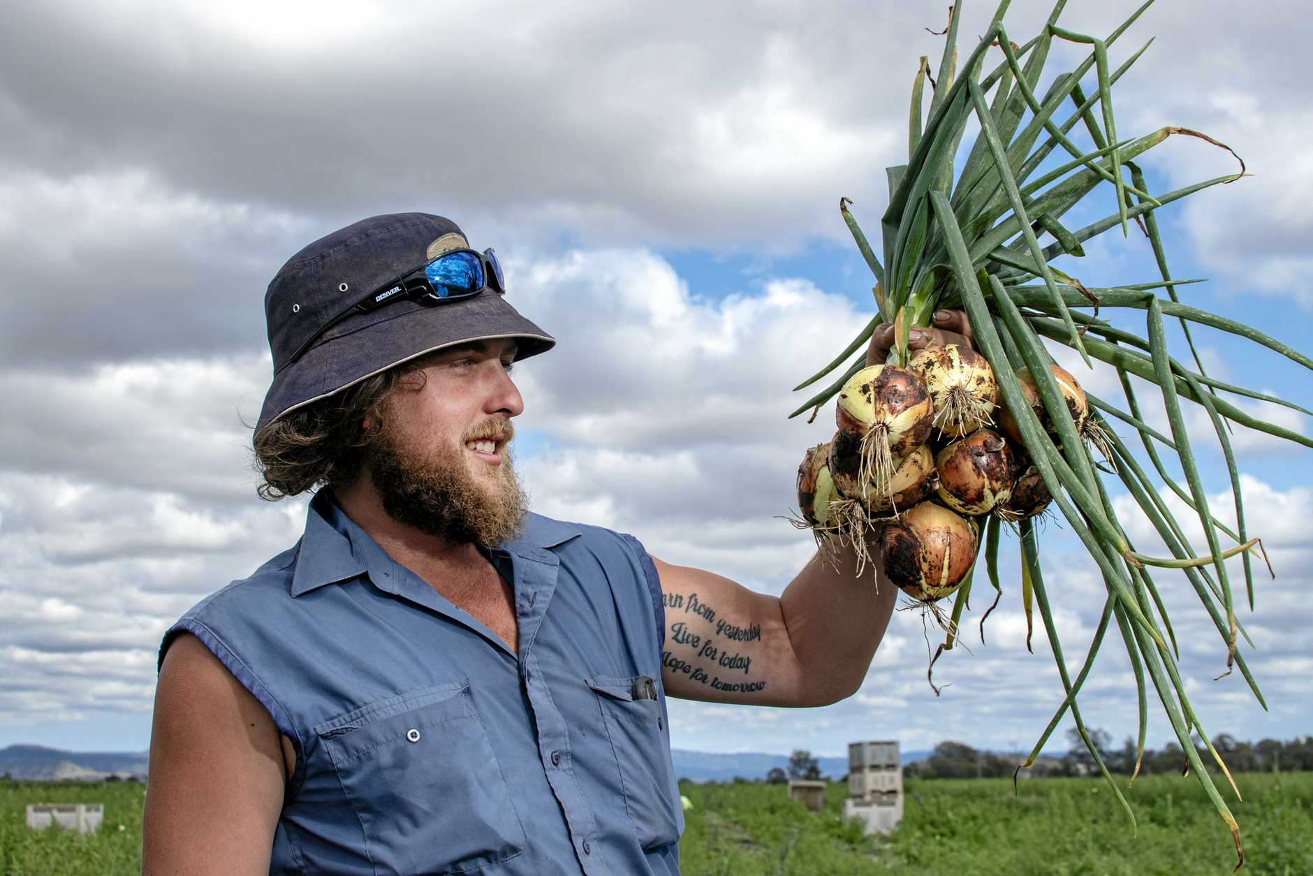 Andrew Mildren, Reck Farms, Lower Tent Hil, inspects some onions from the 2018 Winter season.