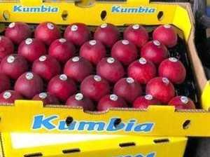 Bid on Kumbia fruit to help Burnett farmers
