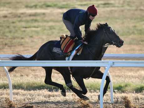 The Aidan O'Brien trained The Cliffsofmoher works at Werribee. Picture: Michael Klein