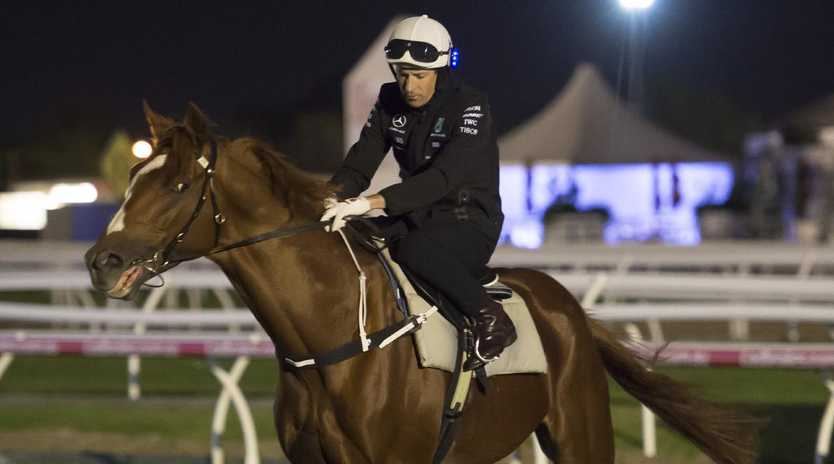 Hugh Bowman riding Finche during trackwork at Caulfield on Tuesday. (Photo by Vince Caligiuri/Getty Images)