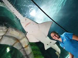 International Sawfish Day