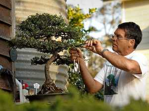 Bonsai a part of Michael's love for all things Japanese