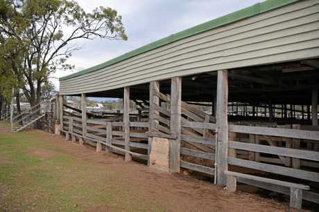 MORE VISITORS: The expansion of the Biggenden saleyards will be a big economic boost for the town.