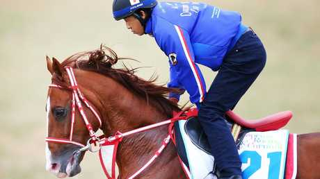 Chestnut Coat has two of his three starts over the Caulfield Cup distance of 2400m. Picture: Getty Images