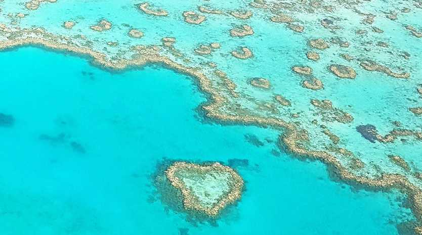 PRESERVATION: An action campaign aims to raise funds to conserve the reef.