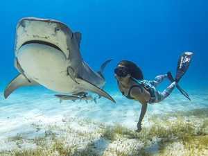 Sharkwater Extinction at Byron Bay Film Festival
